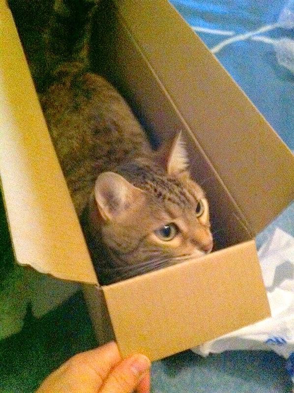 gata caja