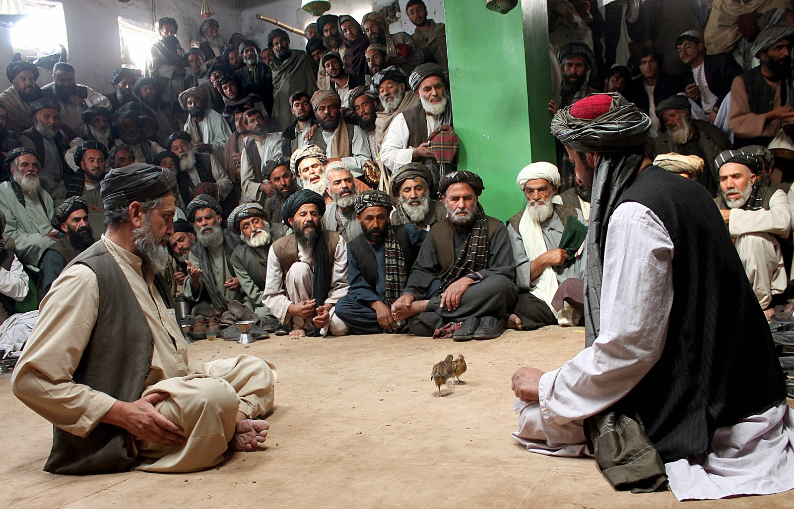 Afghanistan, Fight, Animal, Birds, News, Quailfighting, Quail, Taliban, Unrest, Sports, Offbeat, Feature, Game, Competition, Men, People, War, Economy,