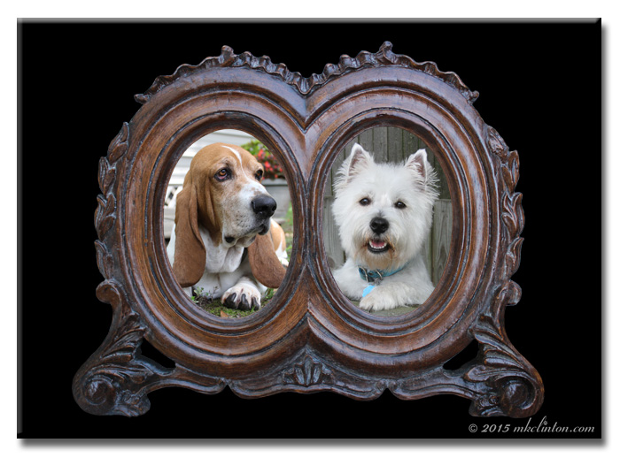 Antique frame with basset and Westie portraits