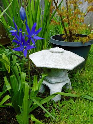 Back Yard, Natural Garden, Eugene, Oregon, Spring, Japan Maple