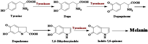 sythesis pathway