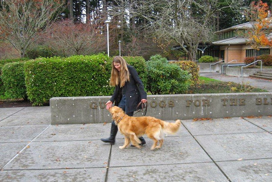 Karyn and Ceili (Golden Retriever) practice loose leash walking