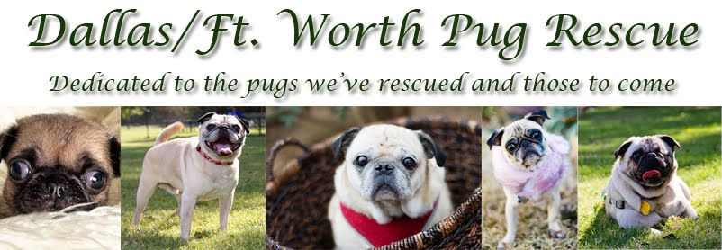 Dallas Fort Worth Pug Rescue