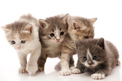 iStock kittens Need to sell fast? Hire Kittens!