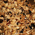 Clean Eating - Granola Recipe