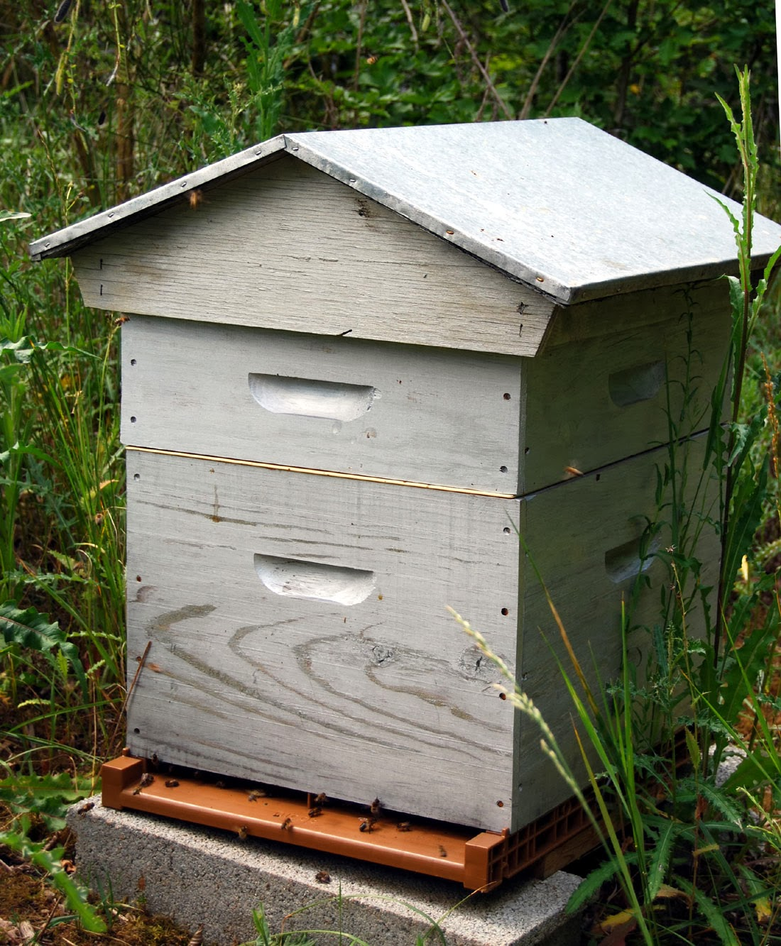 Dadant type honey bee hive in France