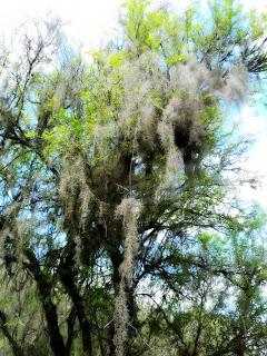 Árvores Junto ao Rio Camaquã, Caçapava do Sul, Rio Grande do Sul