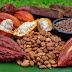 El Cacao ayuda a reducir el riesgo de cáncer de colon
