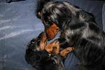 Alphonse (1.5 2010) ja Aslan (30.7 2011)