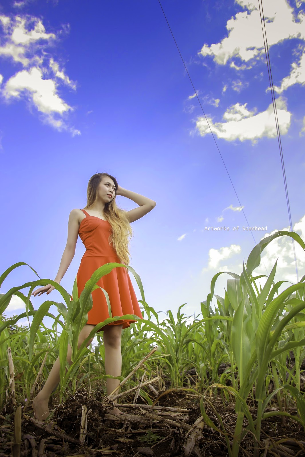 Open fields photography