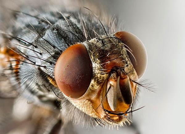 how to get rid flies from your house