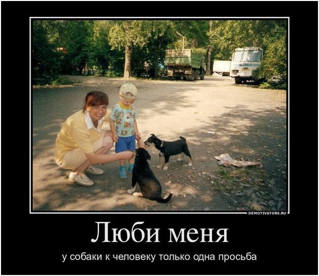 Cats dogs pets animals cat eaters cannibal guest-workers moscow,pravdareport