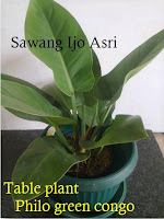 table plant