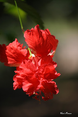 Fotografi: Bunga-Bunga