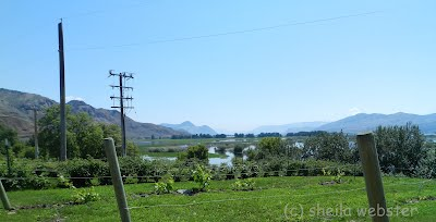 looking from site of Tranquille on the lake towards Kamloops to the east