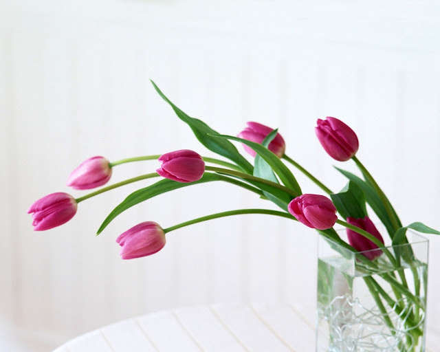 Flowers Wallpapers- Full Fun Place