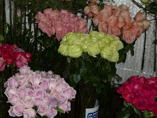ecuador-roses-lilac-pink-cream