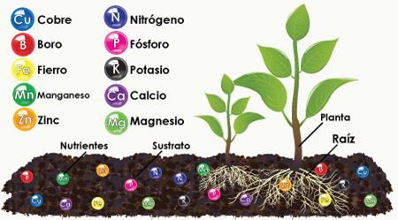 Servicios integrales del agro los macronutrientes y for Componentes quimicos del suelo