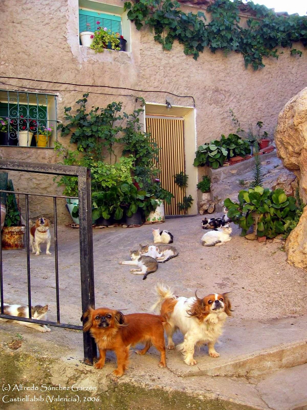 entrada-casa-gatos-perros-castielfabib-valencia