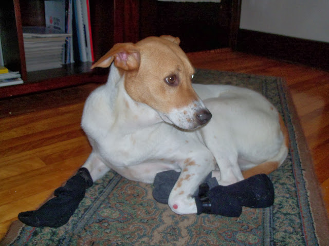 How To Stop Dog Chewing Furniture Home Remedies
