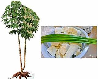 http://obat-herbal-produksi-rumah.blogspot.com/2015/08/obat-ajaib-untuk-kanker.html