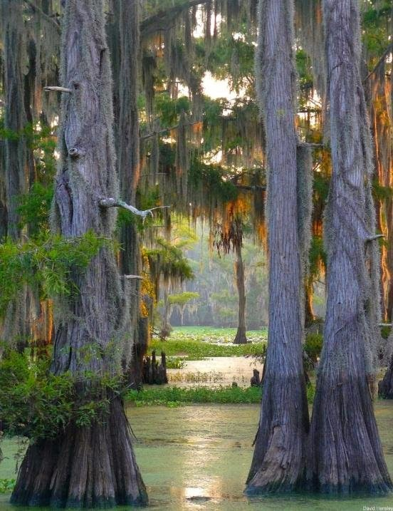 Cypress Forest Caddo Lake, Texas-Louisiana