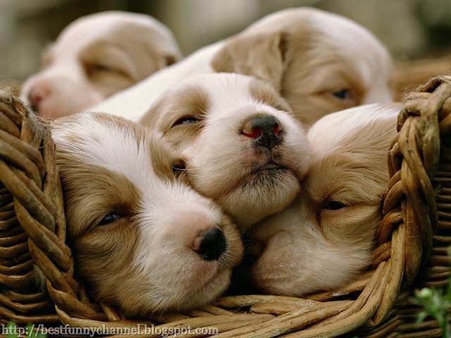 Cute four puppy.