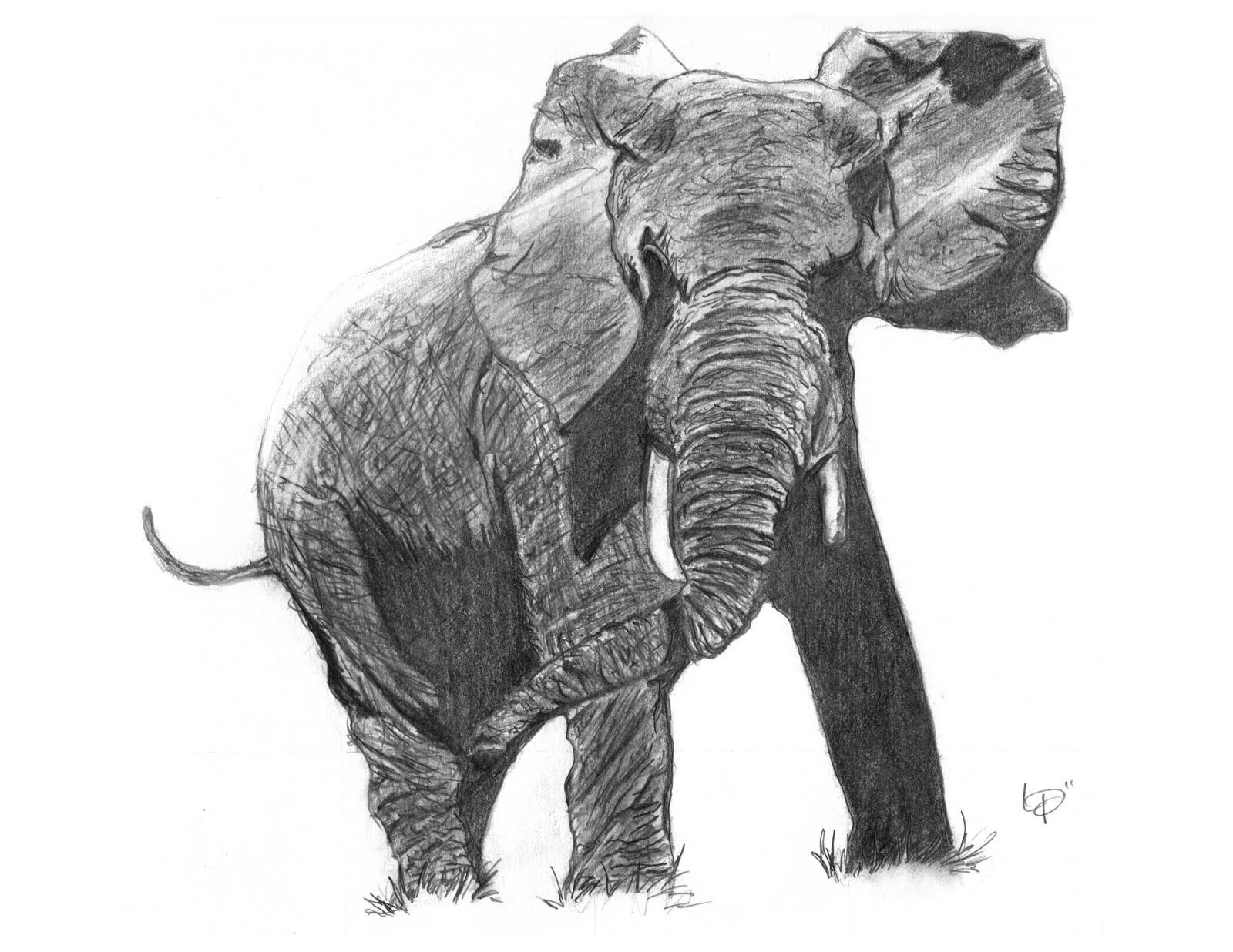 Realistic Elephant Drawings Realistic Elephant Drawing