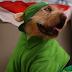 """Πώς τραγουδούν οι σκύλοι το """"All I want for Christmas is you''..."""