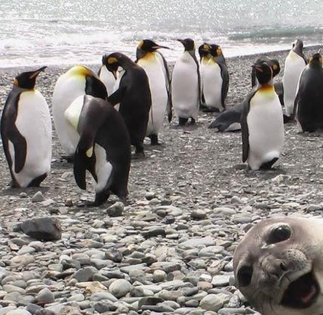funny photobombs