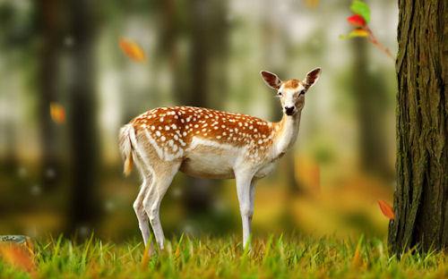 El pequeño venado - Little deer - Cerfs - Bambi