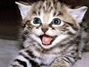 I just found out my ideal pet is a cat! Find out which pet is right . cat cute
