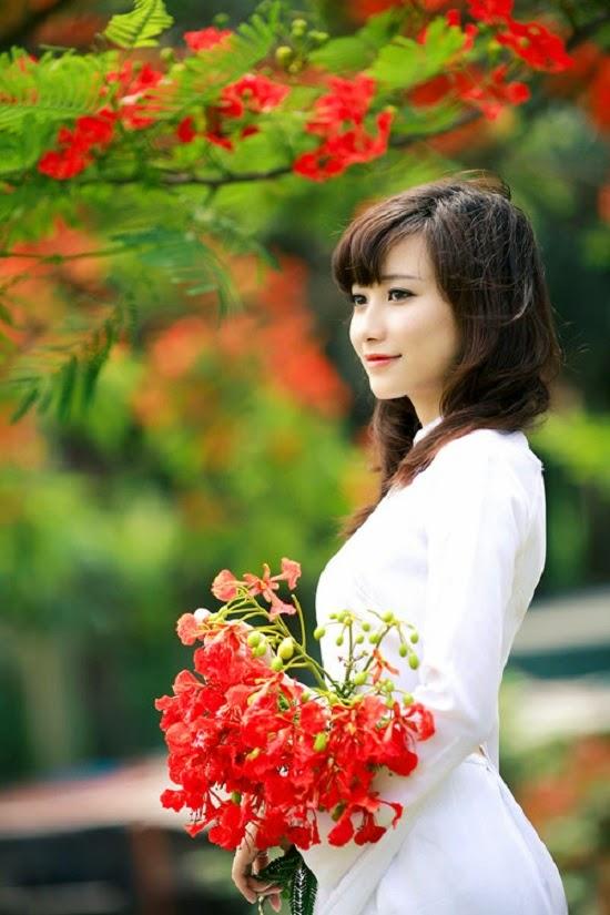 [Image: hoa-phuong-hoc-tro-4.jpg]