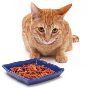 Dry Cat Food Wet