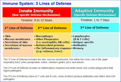 Immune System: 3 Lines of Defense