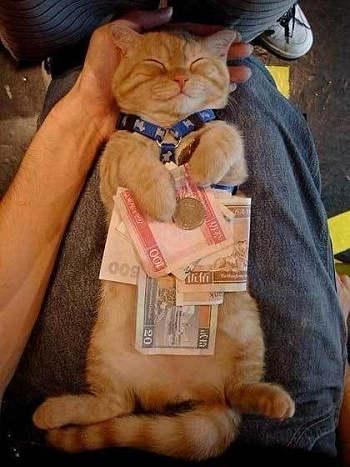 In Fact, Cats Like Money