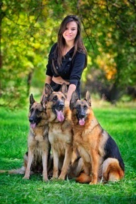 German Sheperd Dogs never get tired of looking at these dogs especially when their is more one