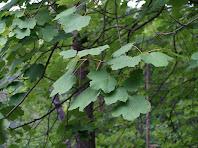 Detall de les fulles d'una blada