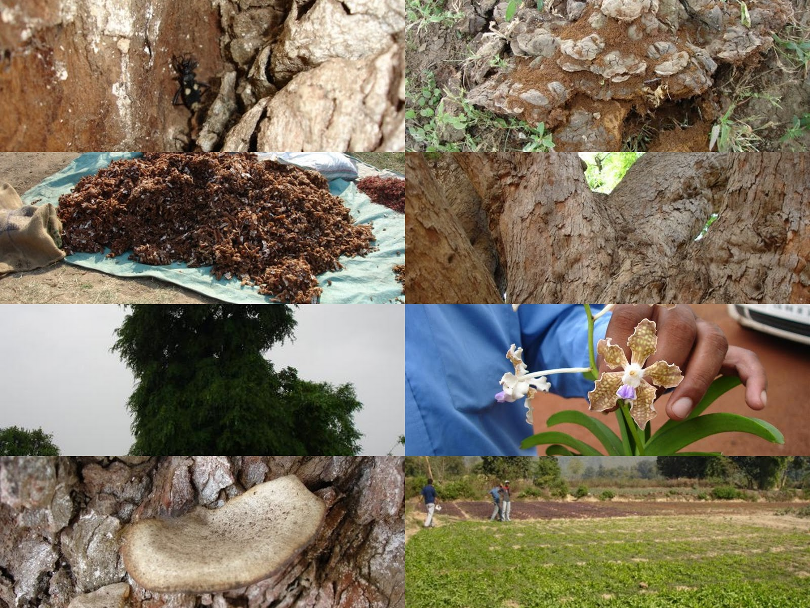 medicinal plants research papers Medicinal plants research papers анатолий живенков загрузка.