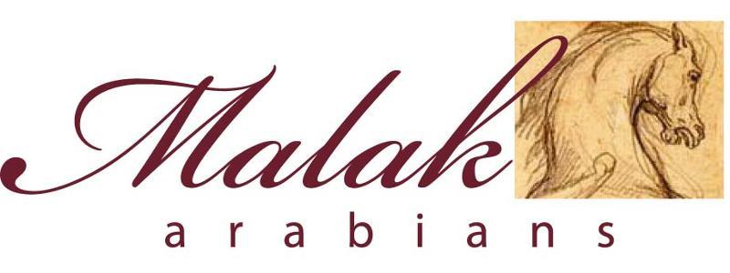 Malak Arabians Caballos Árabes de línea Egipcia