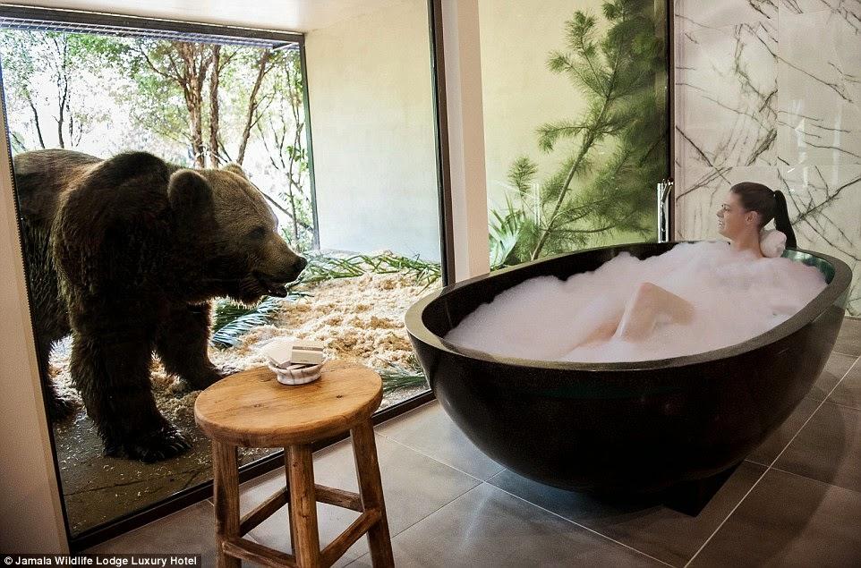 الحمام يطل على بيت الدببة