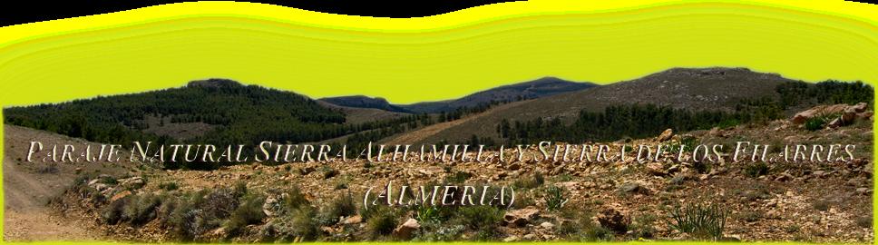 Sierra Filabres y Alhamilla