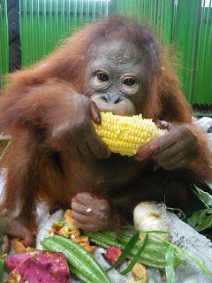 Orangutan Rescue Borneo