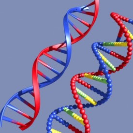 Funny Pictures Gallery: 3d dna, dna, 3d dna model project ...