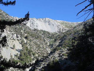 View north up San Antonio Canyon toward Baldy Bowl