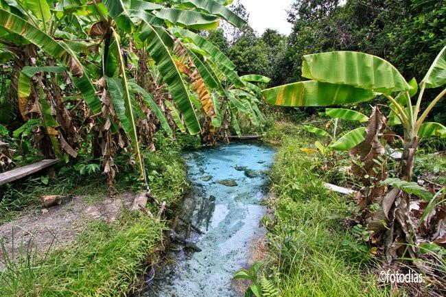 Au milieu des palmiers bananiers dans un endroit isolé, un bassin d'eau turquoise pour baignade de rêve