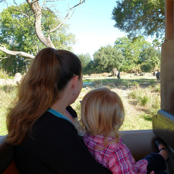 Animal Kingdom, Safari Ride