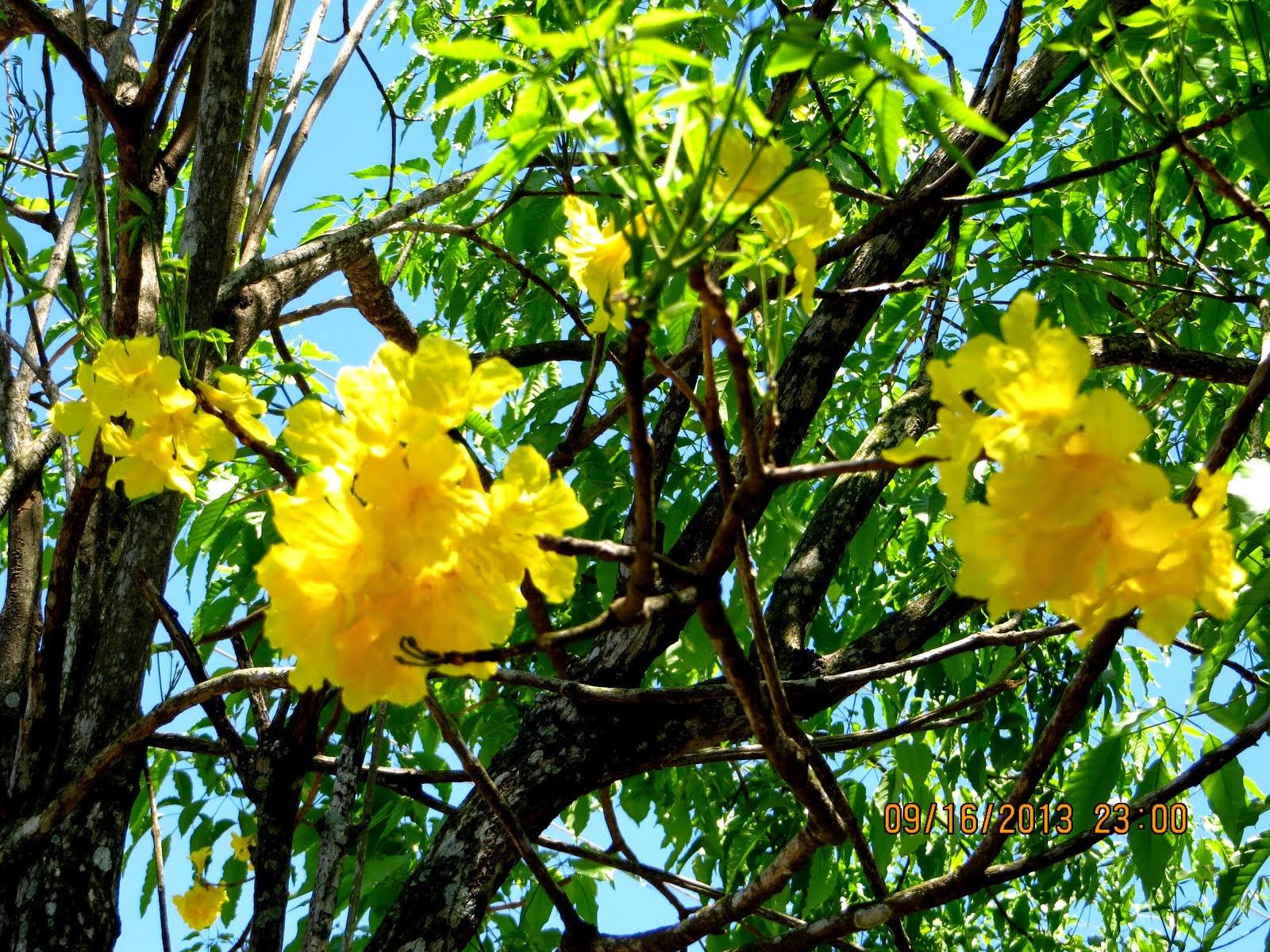 Flora de mi tierra