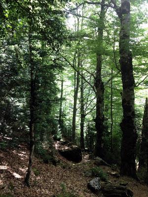 La Selva Pocha