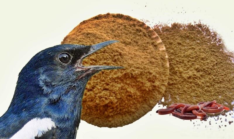 Membuat EF Tepung Cacing untuk Burung Ocehan